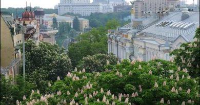 Київські каштани. Історія появи в місті