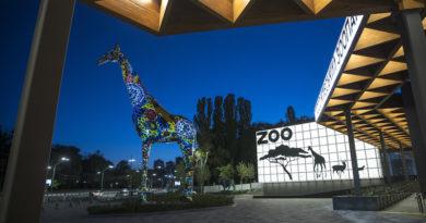 Із 23 травня в столиці планують відкрити зоопарк, де завершили першу чергу реконструкції. Фото та відео
