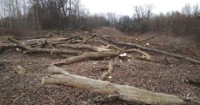 В охоронній зоні музею в Пирогові вирубують залишки лісу, щоб звести житлові новобудови