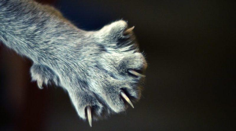 У Києві хвора на сказ кішка вкусила чоловіка