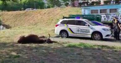 На Саперно-Слобідській збили лося, який два роки жив у місцевих лісопосадках