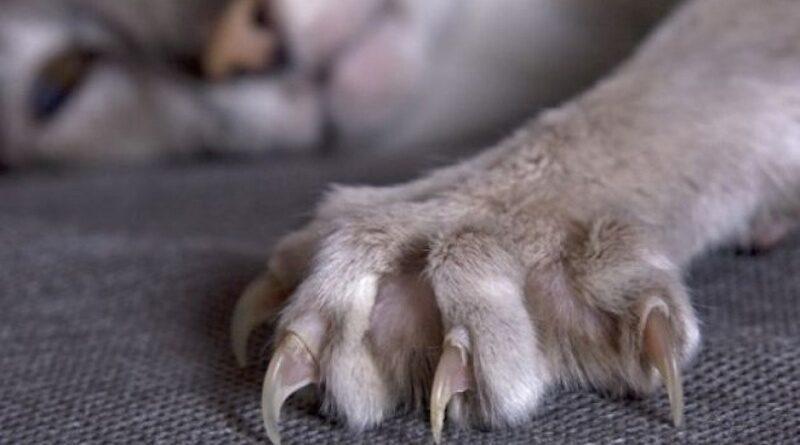 В одному з районів столиці впровадили карантин через випадок сказу у кішки