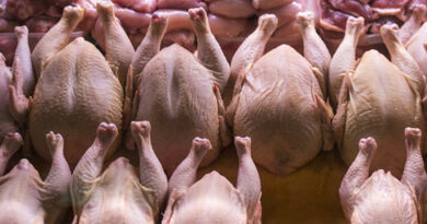 В імпортних курячих крильцях виявлено сальмонелу