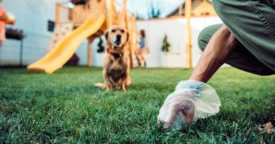 Киянка пропонує усіх володарів собак та інших тварин змусити прибирати за своїми улюбленцями. Петиція
