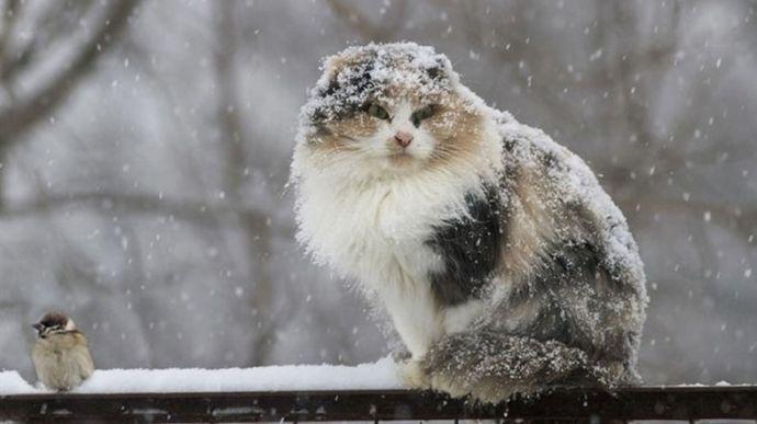 Сніг зі сходу підкрадається до Києва
