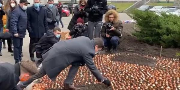 100 тисяч тюльпанів посадили у центрі Києва